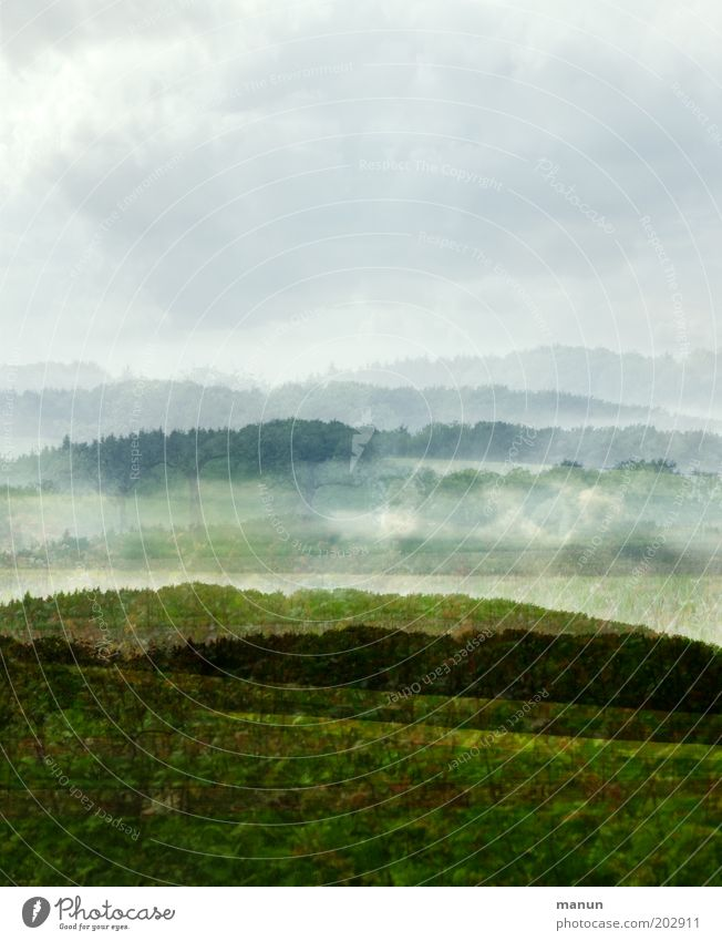 Nature Summer Tree Landscape Forest Environment Life Meadow Grass Spring Exceptional Field Fog Bushes Esthetic Hill