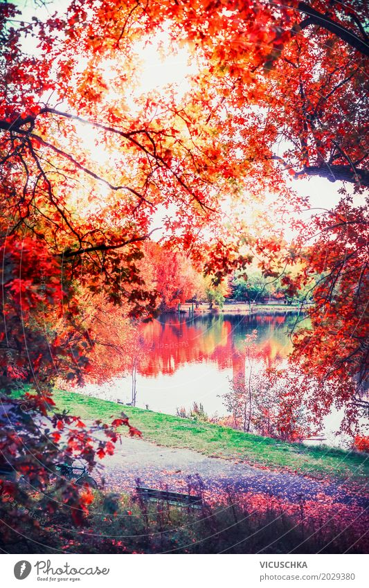 Autumn nature with lake in the park Lifestyle Design Garden Nature Landscape Plant Tree Bushes Leaf Park Yellow Germany Lake Pond Red Beautiful