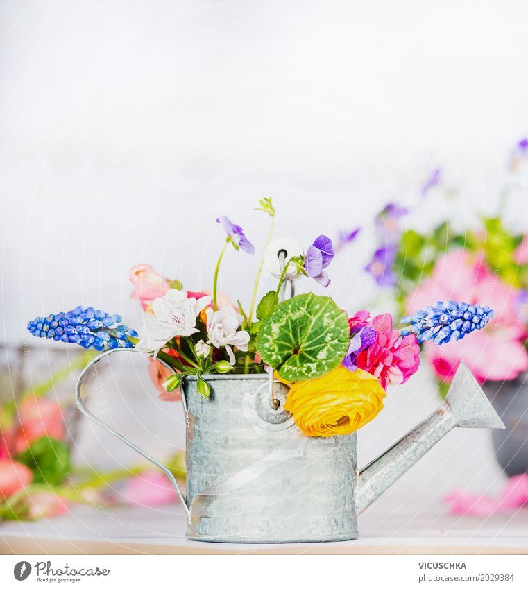 Watering can with colorful garden flowers on the table Style Design Leisure and hobbies Summer Living or residing Interior design Decoration Nature Plant Spring