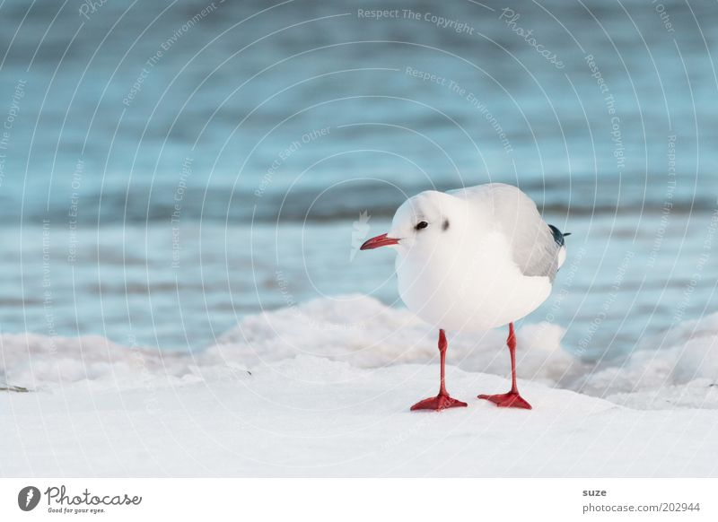 Nature Blue Water White Ocean Animal Winter Environment Cold Snow Coast Small Bird Ice Natural Climate