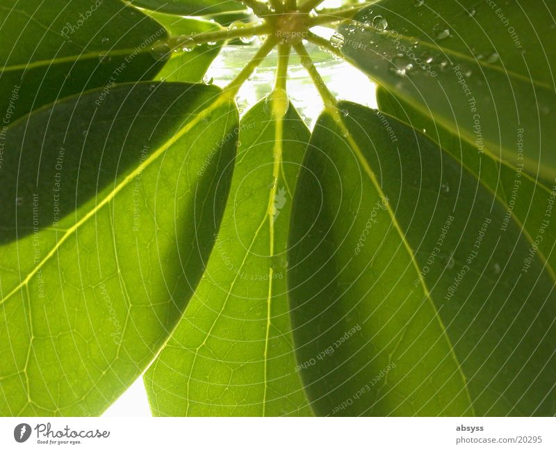 green fan Plant Leaf Green Colour Guide Drops of water Nature Detail Macro (Extreme close-up)