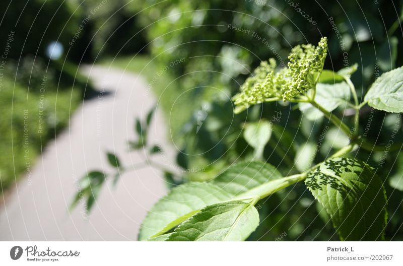 Nature Green Plant Leaf Blossom Lanes & trails Park Environment Climate Branch Complex Light Wild plant