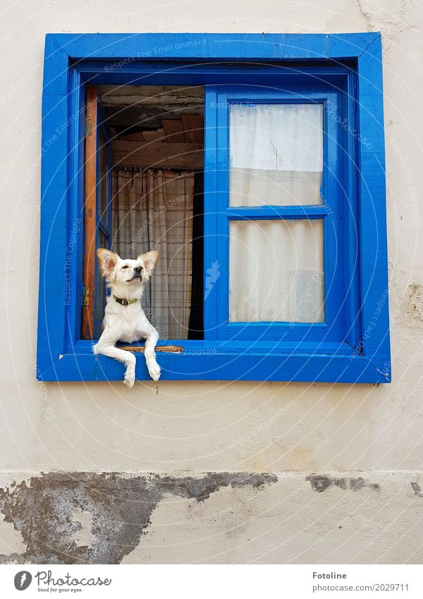 There's something in the air! House (Residential Structure) Wall (barrier) Wall (building) Facade Window Pet Dog Animal face Pelt 1 Blue Window frame