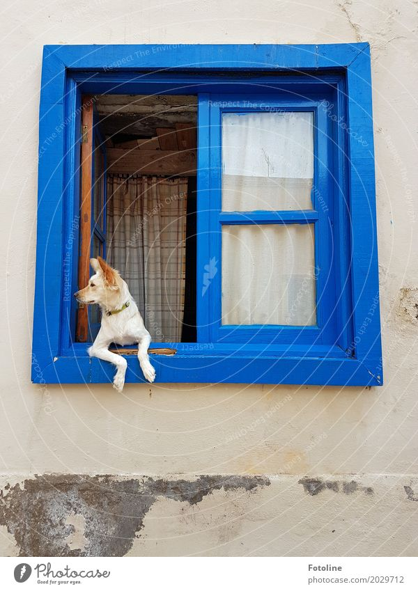 What's going on? House (Residential Structure) Hut Wall (barrier) Wall (building) Facade Window Animal Pet Dog Animal face Pelt Paw 1 Bright Soft Blue Observe