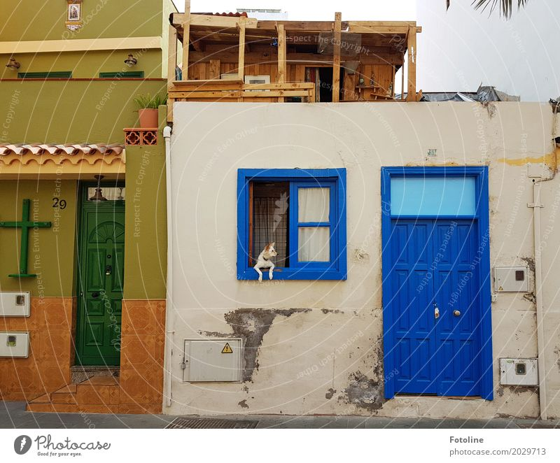 Watchdog ;-) House (Residential Structure) Facade Window Door Pet Dog 1 Animal Blue Brown Green Christian cross Observe Paw Tenerife Colour photo Multicoloured