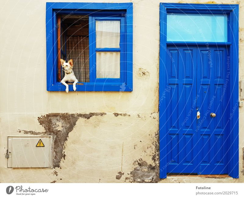 CHILL MAL! House (Residential Structure) Hut Wall (barrier) Wall (building) Facade Window Door Animal Pet Dog Animal face Paw 1 Blue Watchdog Window pane