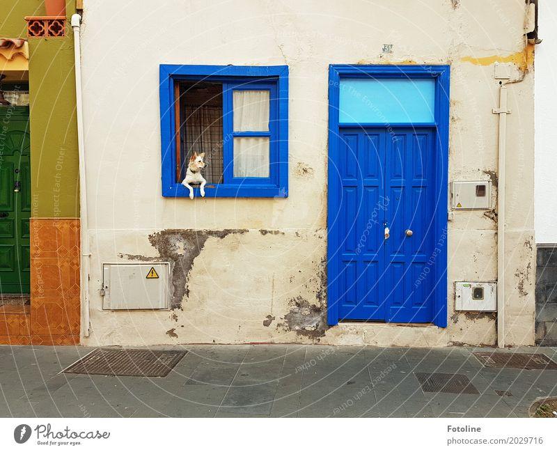 street art House (Residential Structure) Wall (barrier) Wall (building) Facade Window Door Animal Pet Dog Pelt Paw 1 Blue Gray Green Orange Watchdog Guard