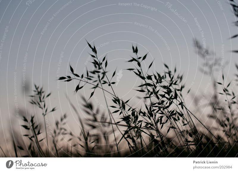 Nature Beautiful Sky Blue Plant Calm Dark Meadow Grass Blade of grass Dusk Grassland Grass meadow