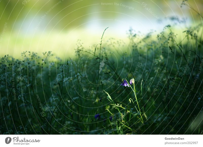 spotlight Environment Nature Landscape Plant Sunlight Spring Weather Flower Meadow Growth Fragrance Free Warmth Colour photo Exterior shot Deserted Light