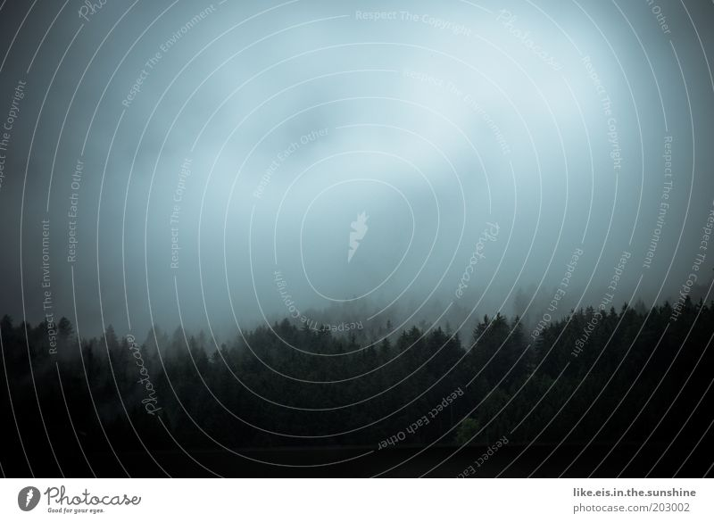 Search image: where is Harry Potter Sky Clouds Bad weather Storm Fog Rain Tree Forest Hill Alps Illuminate Threat Cold Wet Blue Black White Innsbruck Fog bank