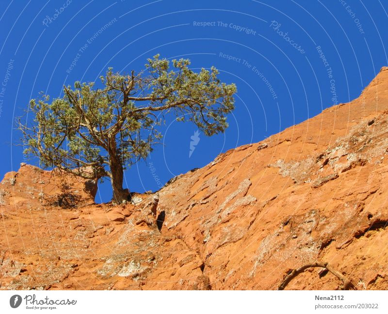 Nature Sky Tree Summer Loneliness Stone Landscape Rock Earth Dry Drought Pine Sparse Provence Ochre Stone pine