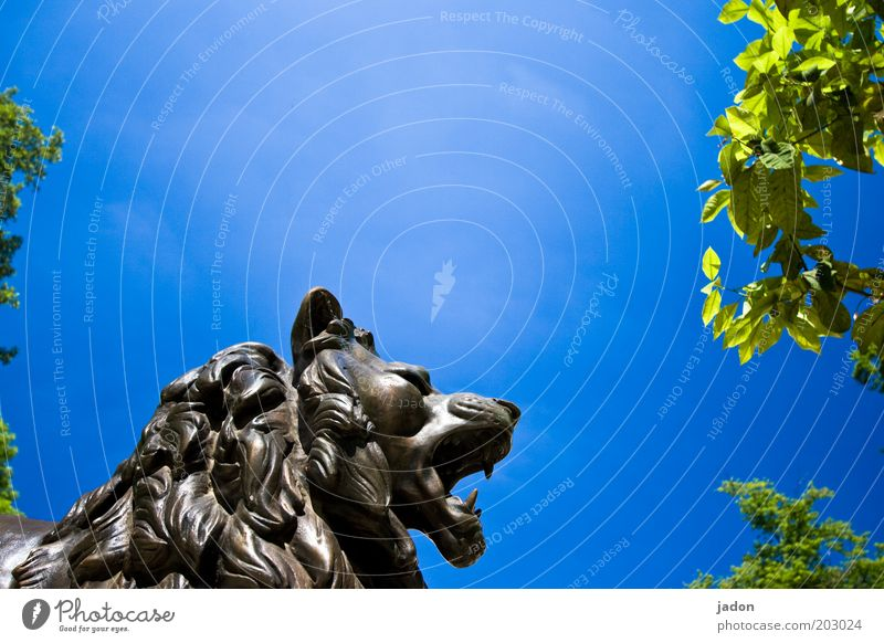 Sky Blue Emotions Head Might Anger Statue Wild animal Sculpture Aggravation Aggression Lion Crisis