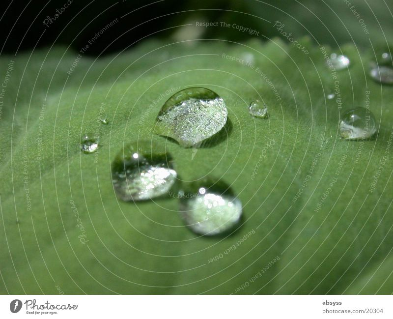 natural tears Leaf Plant Green Drops of water Nature Water Detail Close-up