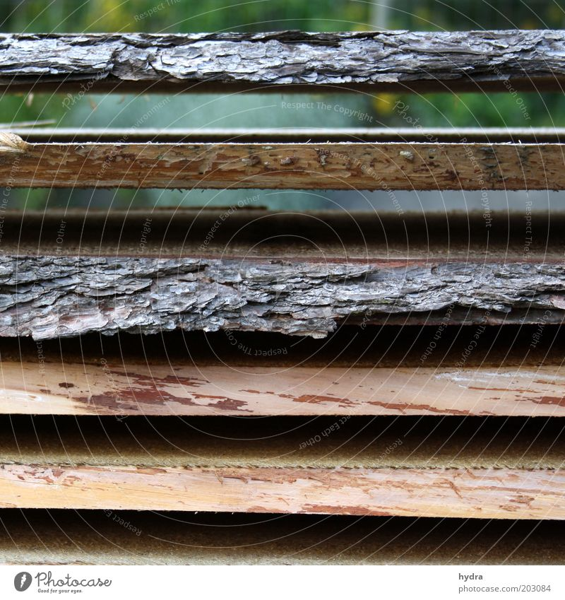 shift Work and employment Joinery Joiners workshop Craft (trade) Nature Wood Lie Esthetic Brown Gray Calm Orderliness Accuracy Equal Sustainability Arrangement