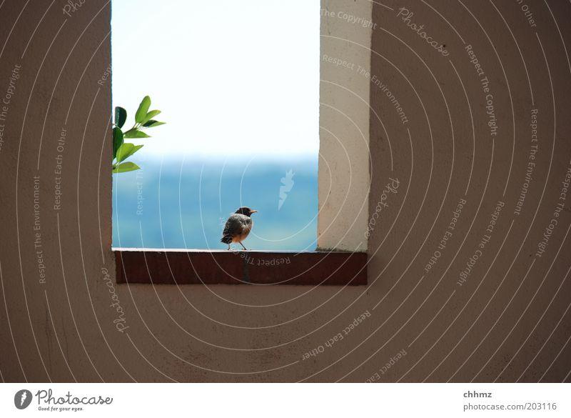 Sky Ocean Plant Leaf Animal Far-off places Wall (building) Window Wall (barrier) Landscape Bird Wait Horizon Sit Hope