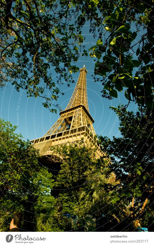 Tree Park Point Paris France Upward Landmark Construction Prop Tourist Attraction Eiffel Tower Steel carrier Spire Crossbeam Steel construction