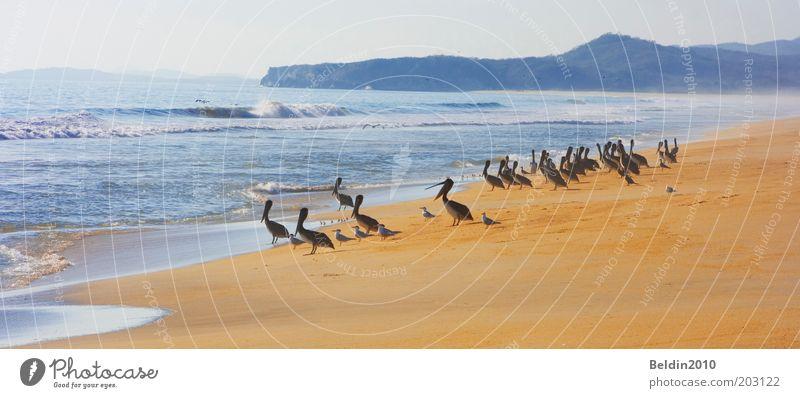 Nature Water Sky Sun Ocean Summer Beach Calm Animal Freedom Warmth Sand Air Bird Waves Coast