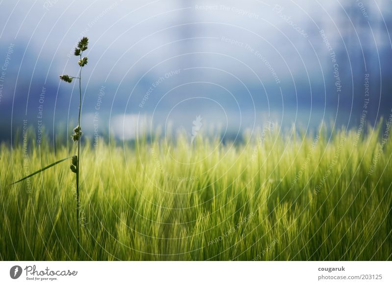 At the edge of the field Environment Nature Landscape Plant Sky Horizon Spring Summer Beautiful weather Grass Foliage plant Agricultural crop Wild plant Field