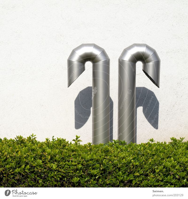 wimp Wall (barrier) Wall (building) Sharp-edged Round Box tree Green Bushes Pipe 2 Curved Structures and shapes Metal Colour photo Exterior shot Close-up Day