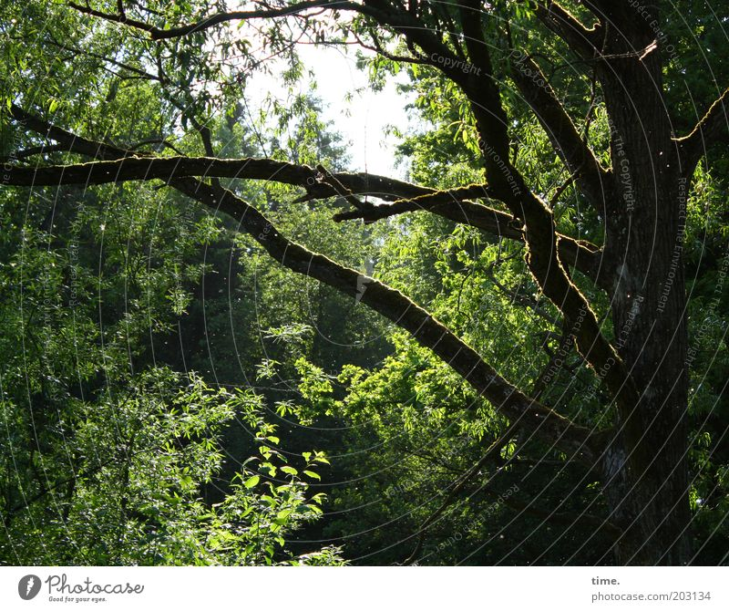 Nature Old Tree Sun Green Plant Calm Forest Environment Growth Bushes Branch Mysterious Virgin forest Muddled Shaft of light
