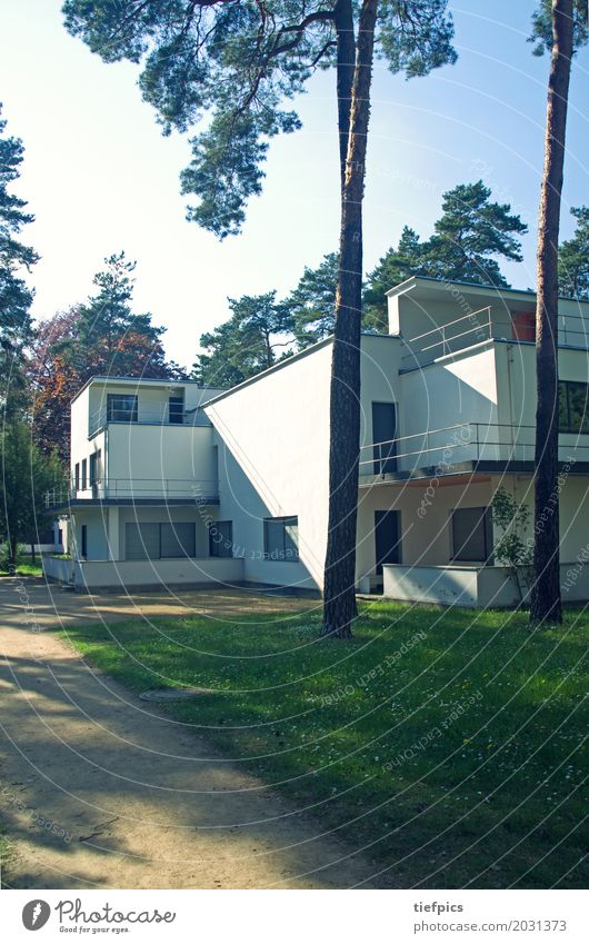 Bauhaus Master House Dessau Style House (Residential Structure) Forest Building Architecture Facade Monument Meisterhäuser bauhaus school Twenties Germany Pine
