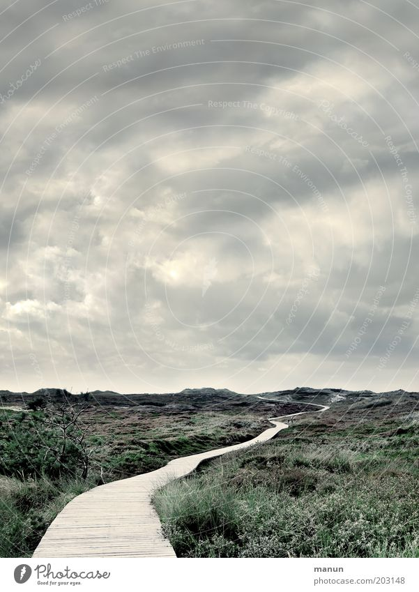 Come on, let's go to Panama! Freedom Nature Landscape Clouds Weather Wind Grass Bushes Moss Wild plant North Sea Island Amrum Dune Marram grass Footbridge Cold