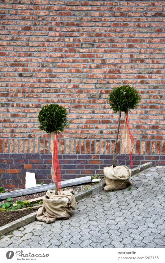 Plant Tree House (Residential Structure) Wall (barrier) Garden Facade In pairs Relationship Brick Cobblestones Paving stone Connectedness Horticulture Little tree Sapling Beech