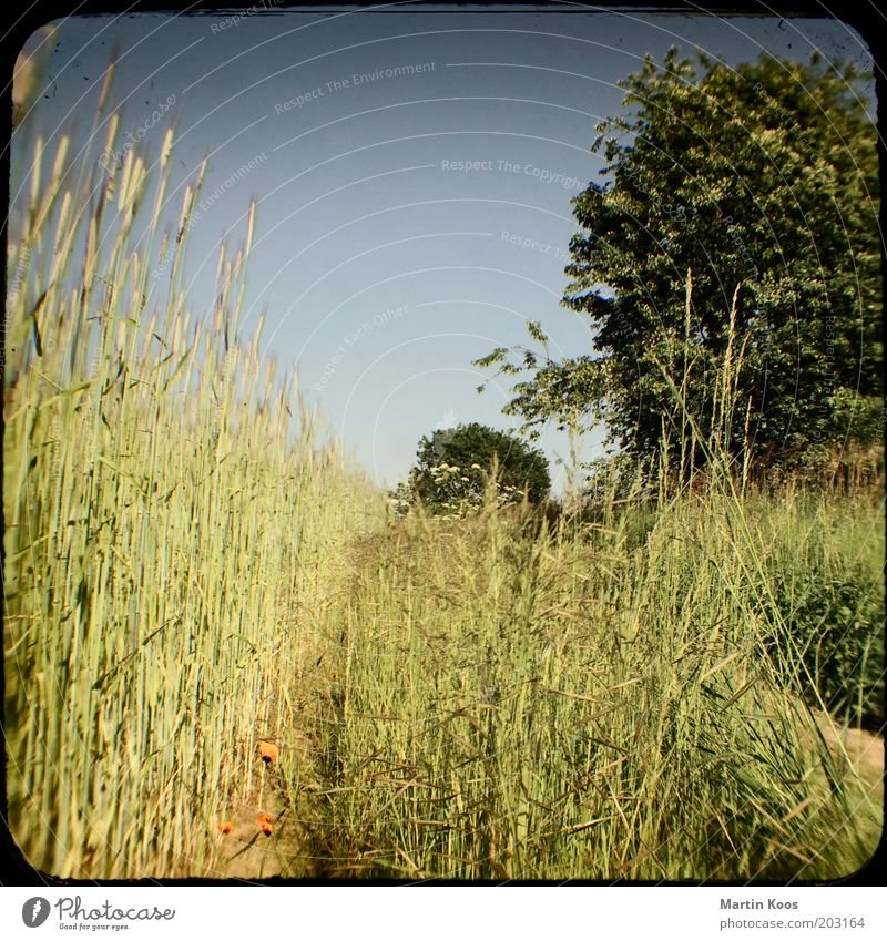 Nature Tree Vacation & Travel Meadow Lanes & trails Warmth Landscape Field Hot Grain Dry Sky Grain field Cloudless sky Camera tossing