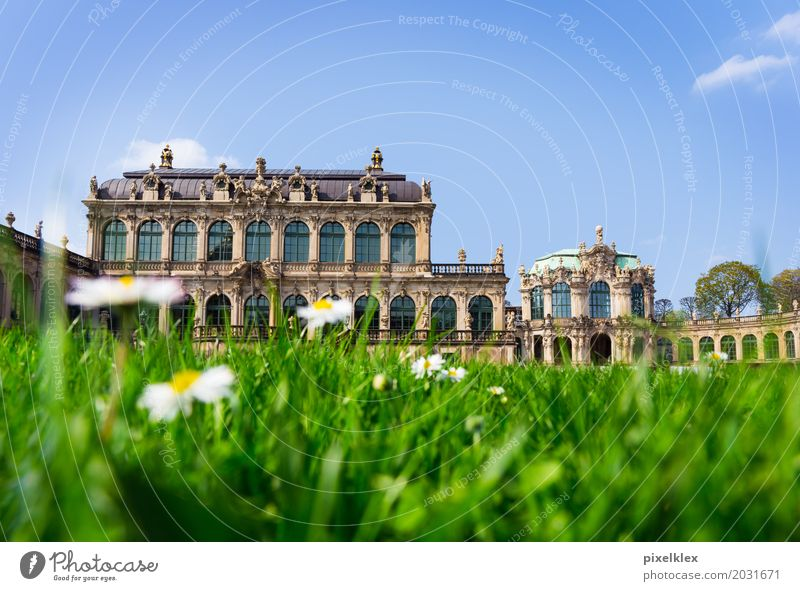 Dresden Kennel Vacation & Travel Tourism Sightseeing City trip Summer Art Museum Architecture Culture Flower Grass Daisy Garden Park Meadow Saxony Germany