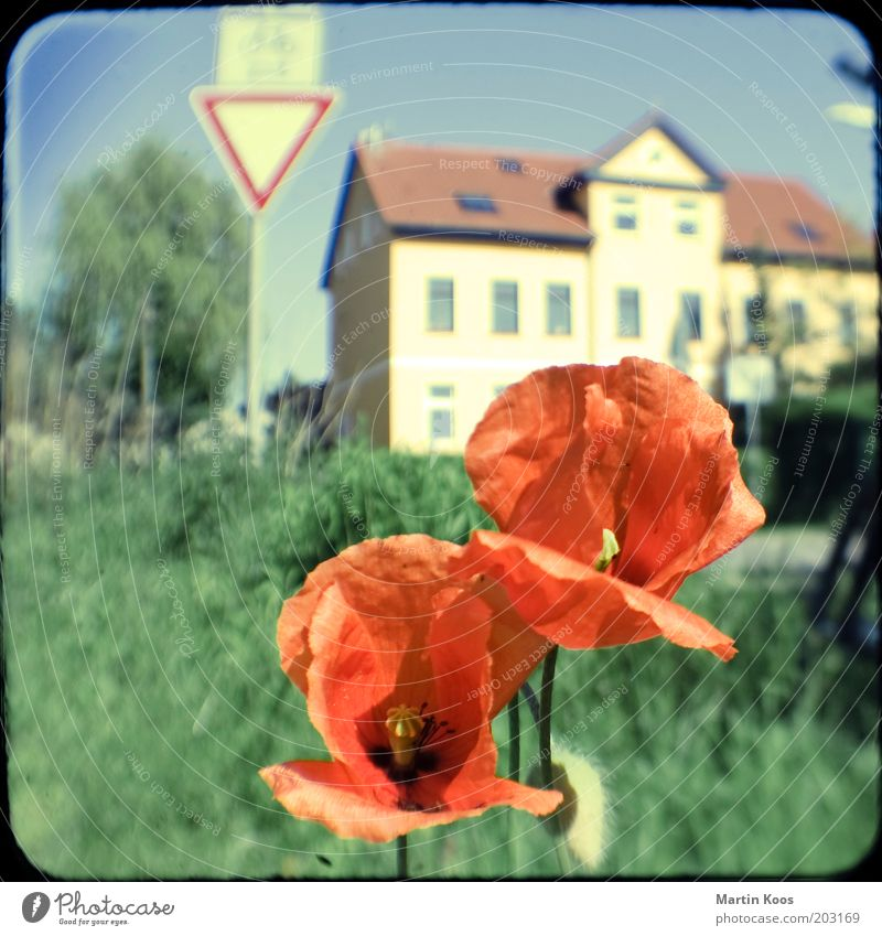 Flower Plant Red House (Residential Structure) Street Meadow Moody Signs and labeling Trip Desire Village Poppy Lanes & trails Attachment Environmental protection