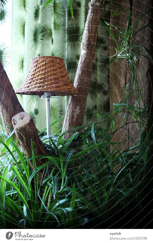 Tree Green Plant Lamp Grass Wood Flat (apartment) Bushes Kitsch Decoration Exceptional Palm tree Tree trunk Cozy Exotic