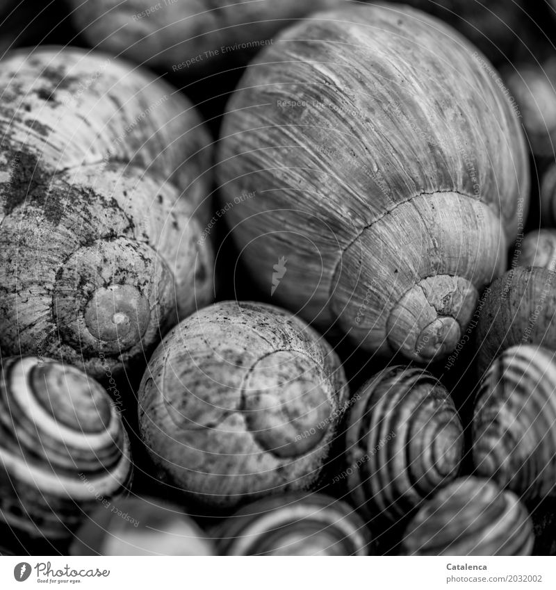 snail meeting place Nature Snail Snail shell Group of animals Old Esthetic Gray Black White Emotions Death End Design Apocalyptic sentiment Environment