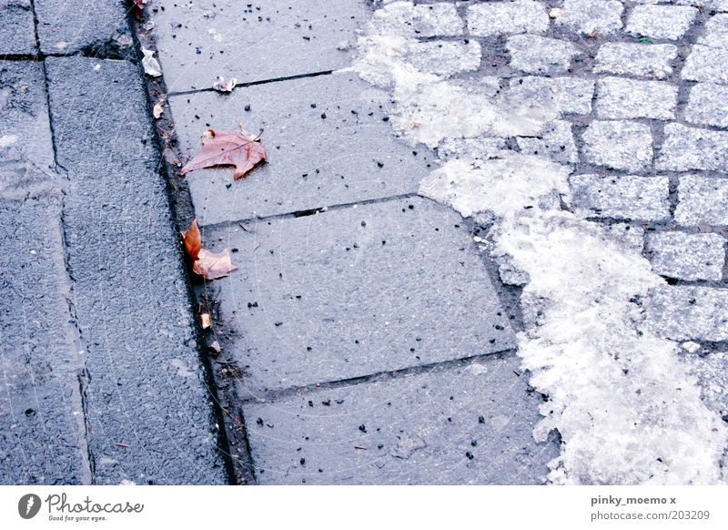 Old Winter Leaf Street Cold Snow Stone Ice Frost Sidewalk Paving stone