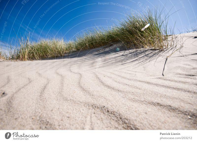 as the land, ... Environment Nature Plant Sand Air Sky Cloudless sky Sun Summer Weather Beautiful weather Coast Beach Ocean Island Spiekeroog marram grass Blue