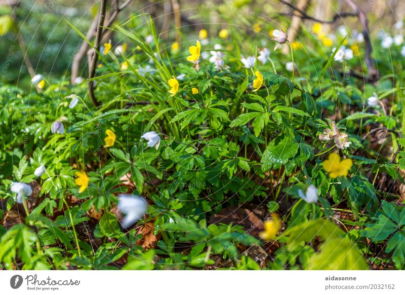 spring Plant Spring Beautiful weather Flower Forest Emotions Contentment Joie de vivre (Vitality) Spring fever Serene Patient Calm Spring snowflake