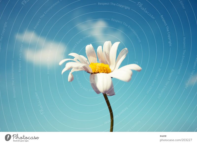 Sky Nature Blue Plant Flower Summer Joy Environment Emotions Blossom Happy Spring Air Wind Free Fresh