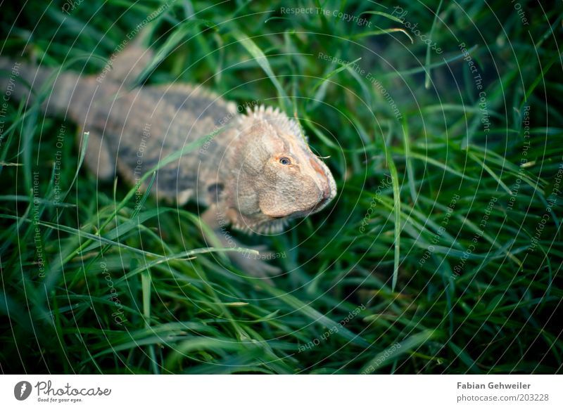 Nature Green Summer Animal Meadow Environment Grass Garden Small Free Authentic Exceptional Animal face Curiosity Observe Rotate