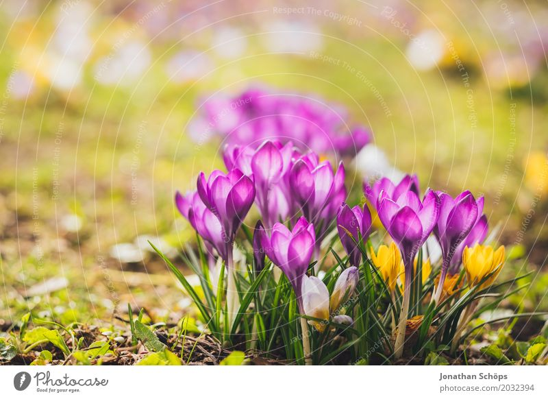 Summer Flower Relaxation Yellow Blossom Spring Meadow Small Garden Pink Growth Blossoming Romance Violet Blossom leave Gaudy