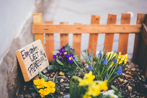 Another world is plantable Summer Garden Gardening Plant Earth Spring Flower Blossom Meadow Street Love Growth Advancement Engagement Wooden fence Garden plot