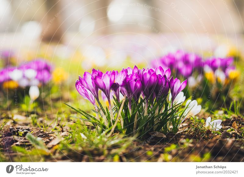 Summer Flower Relaxation Yellow Blossom Spring Meadow Small Garden Pink Growth Esthetic Idyll Blossoming Joie de vivre (Vitality) Romance