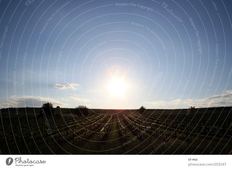 Sky Nature Plant Sun Summer Clouds Calm Freedom Landscape Warmth Weather Germany Field Europe Vine