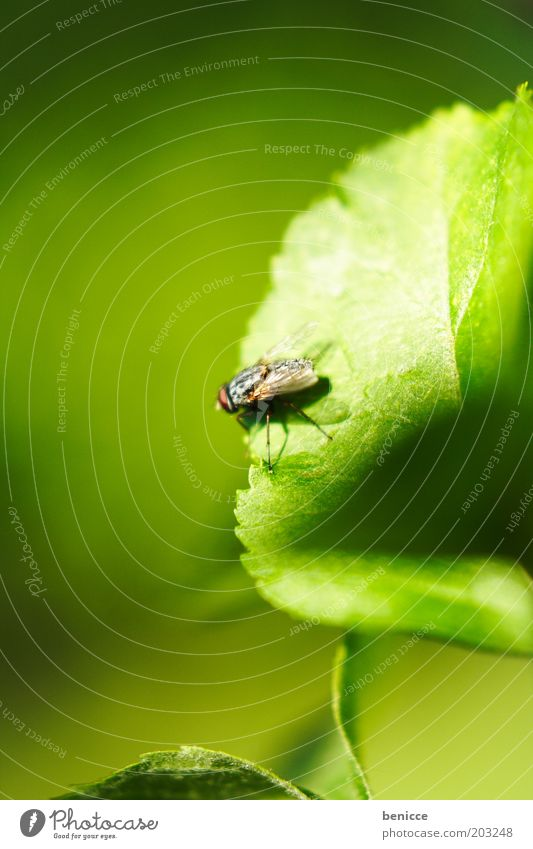 Nature Green Plant Leaf Fly Sit Wing Insect Environment
