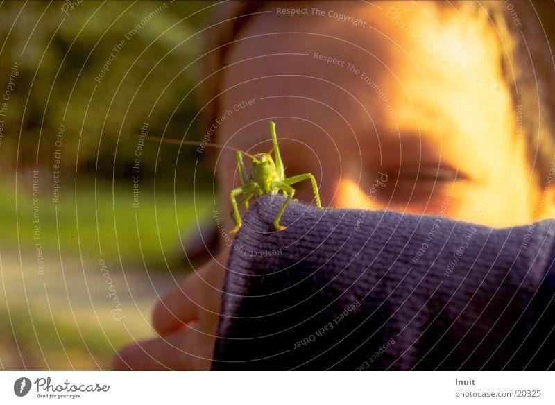Child Eyes Locust Great green bushcricket