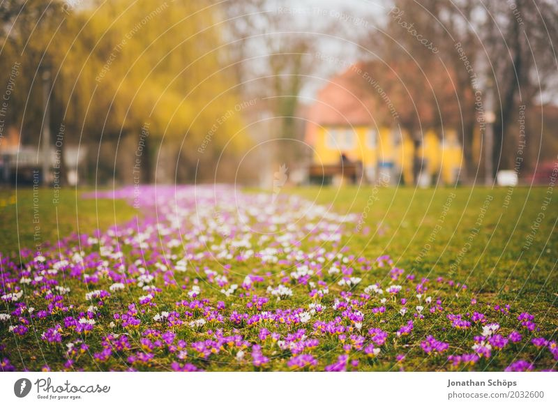 Spring meadow XI Relaxation Summer House (Residential Structure) Garden Flower Blossom Park Meadow Growth Small Many Yellow Violet Pink Idyll Carpet of flowers