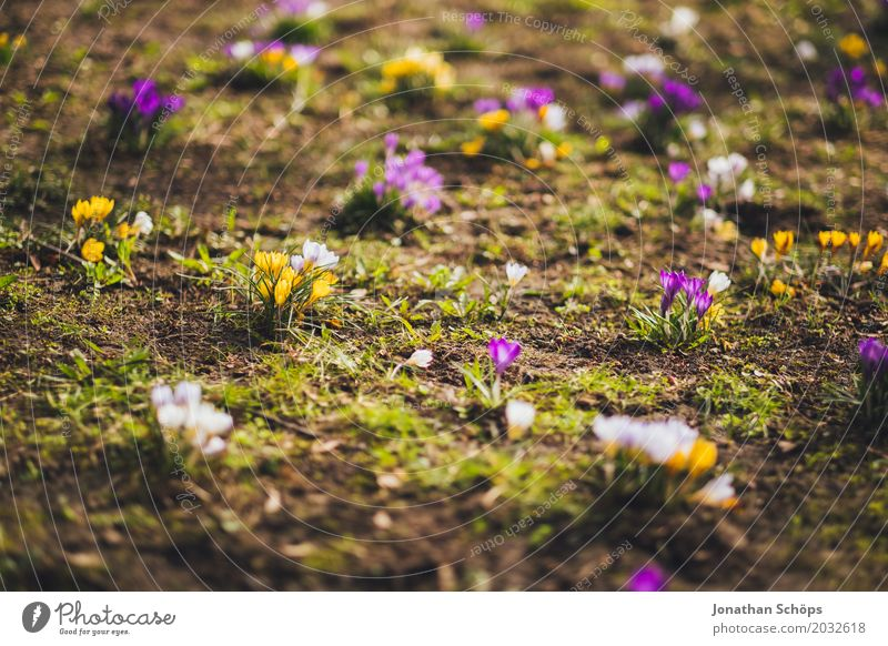 Summer Flower Relaxation Joy Yellow Blossom Spring Meadow Grass Garden Pink Park Contentment Growth Idyll Happiness
