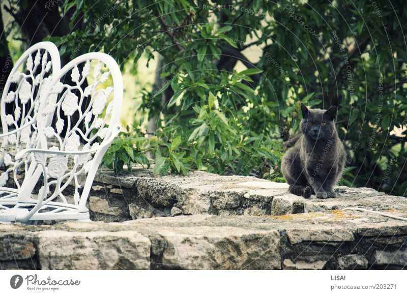 pump Nature Plant Animal Summer Tree Pet Cat Pelt 1 Brown Gray Green Black White Chair Sit Observe Watchfulness Ear Colour photo Multicoloured Exterior shot