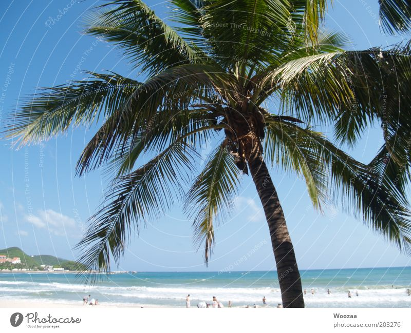Sanya PalmBeach Human being Group Summer Beautiful weather Warmth Island Hainan Swimming & Bathing Relaxation Lie Dream Exotic Hot Blue Joie de vivre (Vitality)