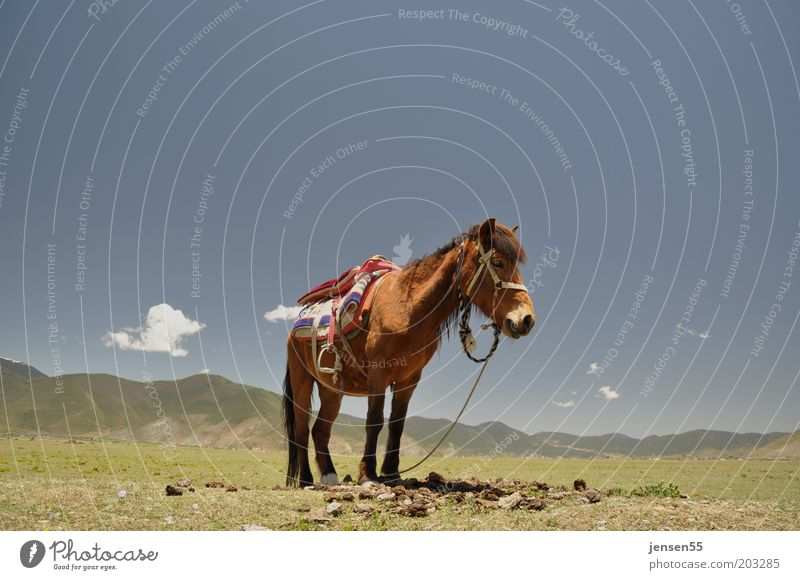 loneliness Ride Equestrian sports Environment Landscape Sky Cloudless sky Mountain Animal Horse 1 Stand Wait Serene Patient Calm Nature Colour photo
