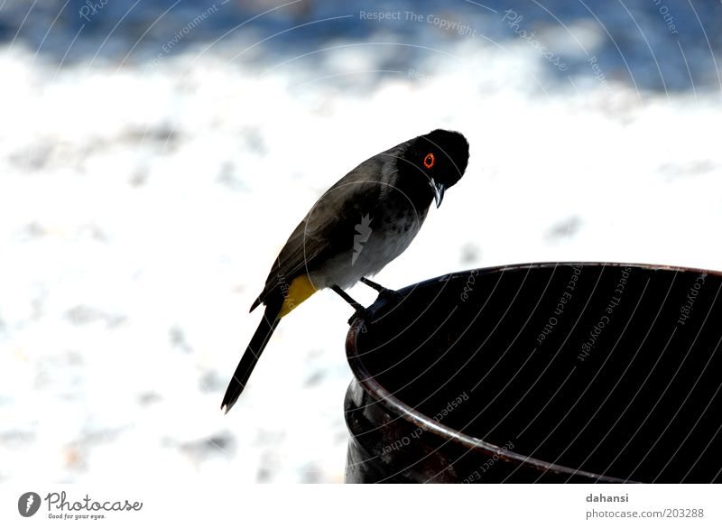 Curiosity meets black hole Animal Wild animal Bird 1 Observe Discover Looking Brash Free Nerviness Nature Colour photo Close-up Deserted Day Animal portrait Keg