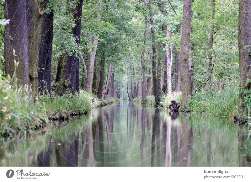 Spreewald Calm Nature Forest River bank Idyll Environment Nature reserve Dream world Reflection Mirror image Lubbenau Colour photo Exterior shot Deserted Tree